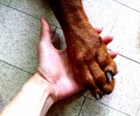 Paw in Hand.